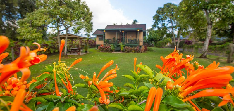 Hanalei-Land-Co-Vacation-Rentals-Hanalei-Palaka-flowers